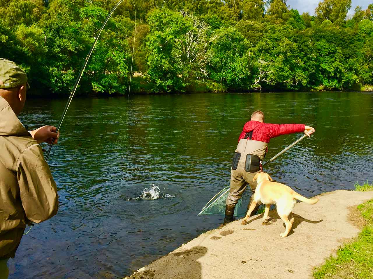 netting scottish salmon
